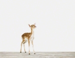 Baby Deer_ Baby Animal Photography Prints